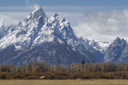 A Horse In Front Of The Grand Teton by Galloimages Online art print