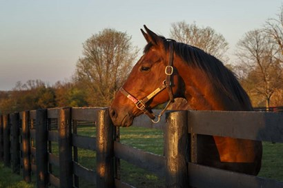 Horse At Sunset by Galloimages Online art print