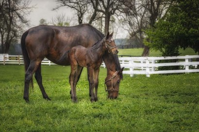 Mare And Foal Together by Galloimages Online art print