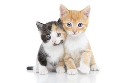 Kittens 1 by Andrea Mascitti art print