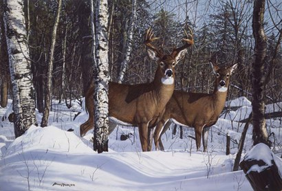 Zone 1 Whitetail by Bruce Miller art print