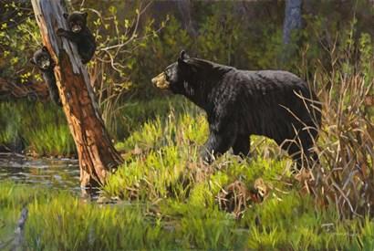 Black Bear by Bruce Miller art print