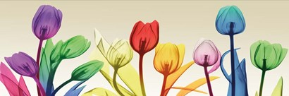 Floral Rainbow Splurge by Albert Koetsier art print