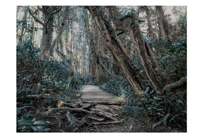 Path In The Forest 2 by Vladimir Kostka art print