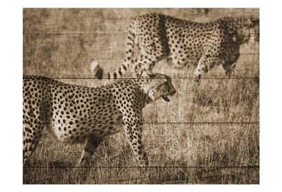 Safari Team by Sheldon Lewis art print