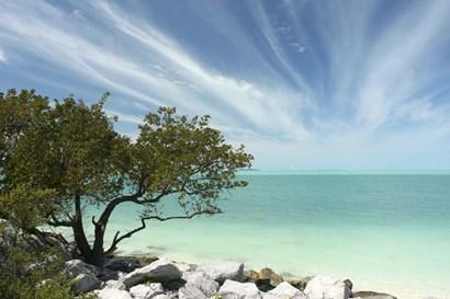 Key West Tree 1 by Robert Goldwitz art print