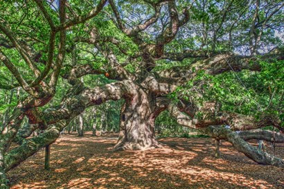 Angel Oak by Robert Goldwitz art print