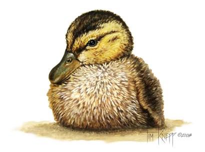 Duckling by Tim Knepp art print
