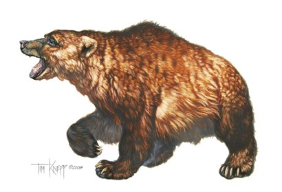 Cave Bear by Tim Knepp art print