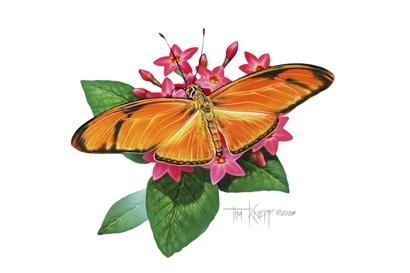 Julia Butterfly by Tim Knepp art print