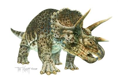 Triceratops by Tim Knepp art print