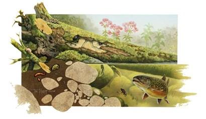 Trout Stream by Tim Knepp art print