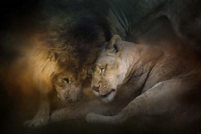Lion Love by Jai Johnson art print