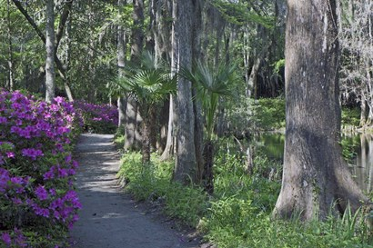 Middleton Place 8, SC by J.D. McFarlan art print