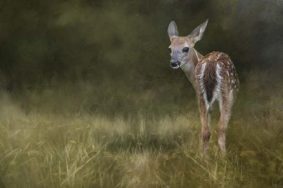 Tiny Fawn In The Meadow by Jai Johnson art print