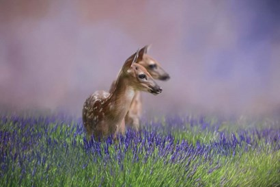 Twin Fawns In The Lavender by Jai Johnson art print