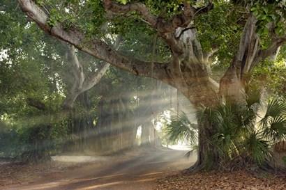 Boca Grande Banyon Street by Mike Jones Photo art print