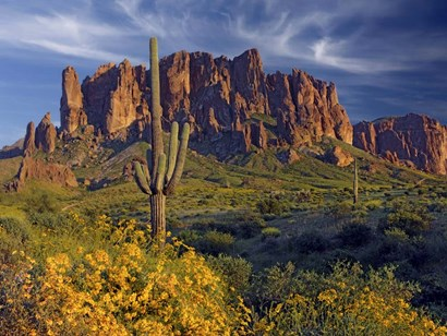 Lost Dutchman flowers by Mike Jones Photo art print