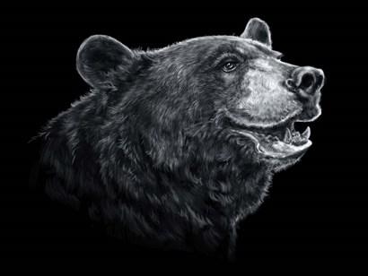 Black White Black Bear by Patrick LaMontagne art print