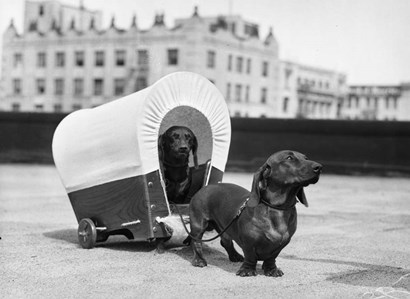 1930s Two Dachshund Dogs by Vintage PI art print