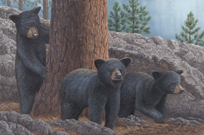 Black Bear Cub Trio by Jeffrey Hoff art print