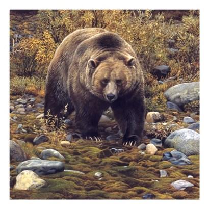 Trailblazer - Grizzly Bear (detail) by Carl Brenders art print