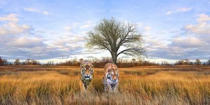 Wild Cats by Ata Alishahi art print