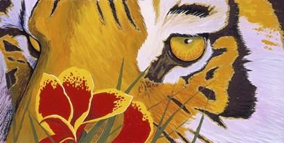 Tiger Eye by Graeme Stevenson art print