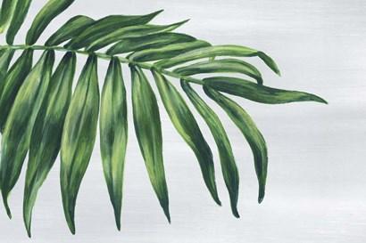 Tropical Leaf I by Eva Watts art print