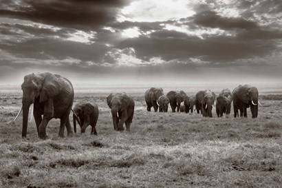 Amboseli elephants by Jorge Llovet art print