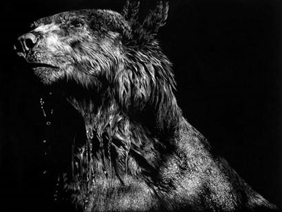 Ursa Major by Julie Chapman art print