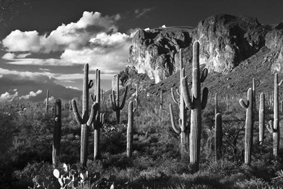 Superstition Mtn Saguaros Arizona by Tom Brossart art print