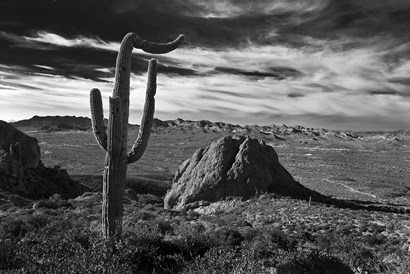 Saguaros Lost Dutchman State Park Arizona Superstition Mtns 2 by Tom Brossart art print