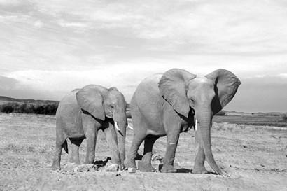 Elephant Mother by Ata Alishahi art print