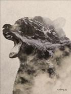Bear Fog
