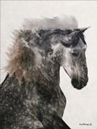 Proud Stallion