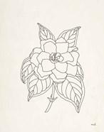 Gardenia Line Drawing