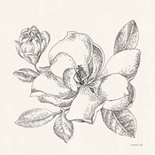 Flower Sketches II