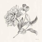Flower Sketches I