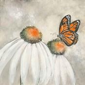 Butterflies are Free II