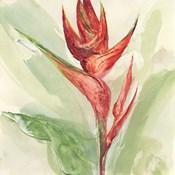 Exotic Flower IV