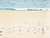 Relaxed Seagulls