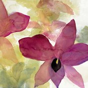 Beautiful and Peace Orchid II