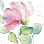Fragrant Hibiscus I