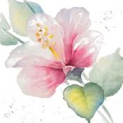 Fragrant Hibiscus II