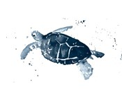Navy Ink Turtle I