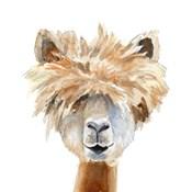 Llama with Bangs