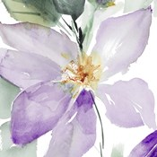 Clematis in Purple Shades I