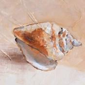 Copper Sea Shell
