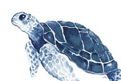 Turtle in the Blues
